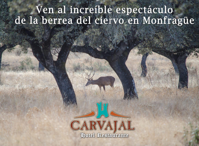 Berrea en Monfragüe